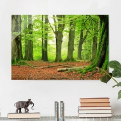 Glasbild: Mighty Beech Trees Wallart.de