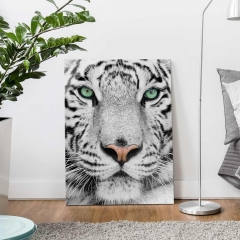 Glasbild: Weisser Tiger Wallart.de